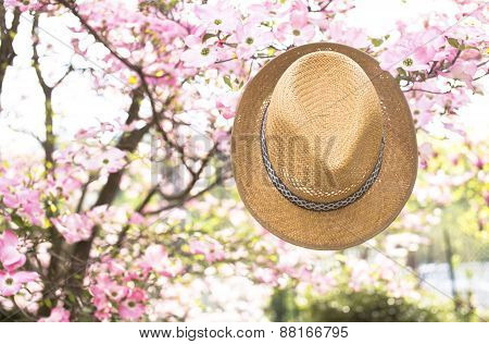 Old straw hat against attached on a plant in garden