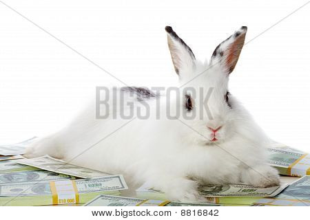 Rabbit With Money