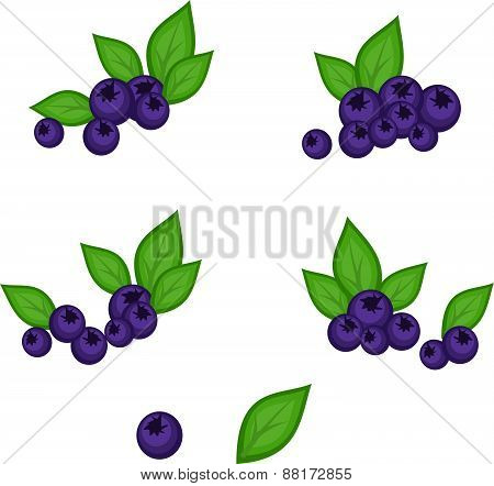 Vector Blueberry