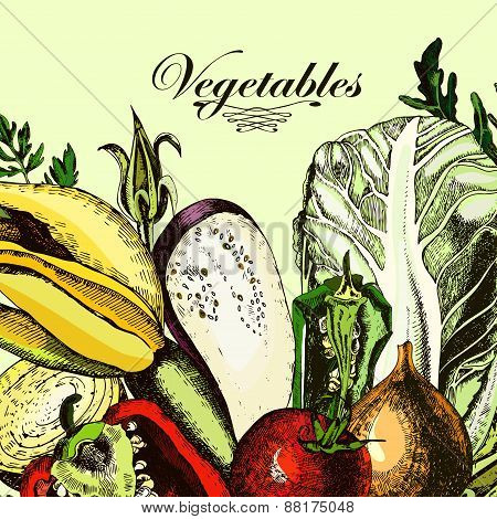 Organic Vegetables. Still-life with fresh cabbage, tomatoes, peppers, eggplant, onions and herbs.