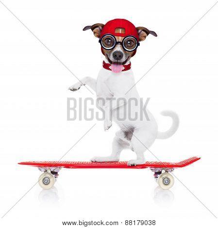 Skater  Boy Dog