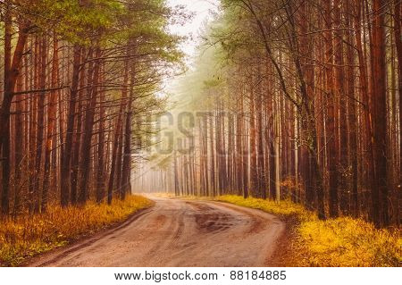 Road Fog In Forest