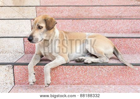 The Dog Waiting For Someone At Home
