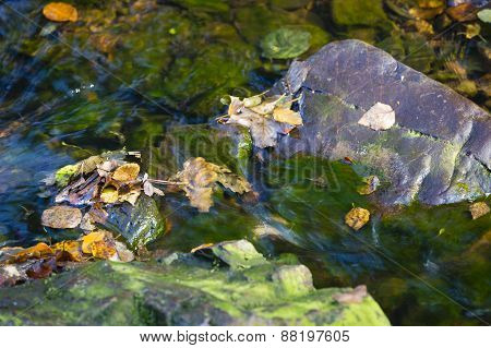 Autumn Leafs In Creek Detail, Belgium