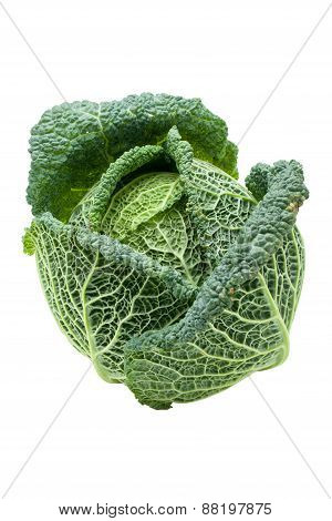 Head Of Ripe Savoy Cabbage Isolated