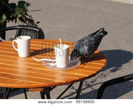 Dove on a table