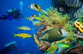 foto of fire coral  - Tropical Fish and Coral Reef on Red Sea - JPG