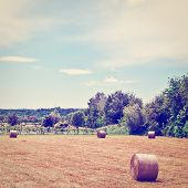 foto of hay bale  - Landscape with Many Hay Bales and Vineyard in Italy Instagram Effect - JPG
