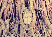 stock photo of buddha  - Buddha head in tree roots at ayutthaya  - JPG