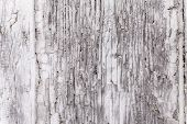 stock photo of coat  - Gray coat of paint on a weathered wooden window shutter panel cracking - JPG