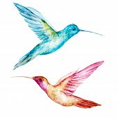 picture of colibri  - Beautiful vector image with nice watercolor colibri bird - JPG