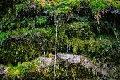 stock photo of water jet  - Moss on the rock with water jets - JPG