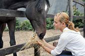 stock photo of feeding horse  - teenage girl feeding horse in the farm - JPG