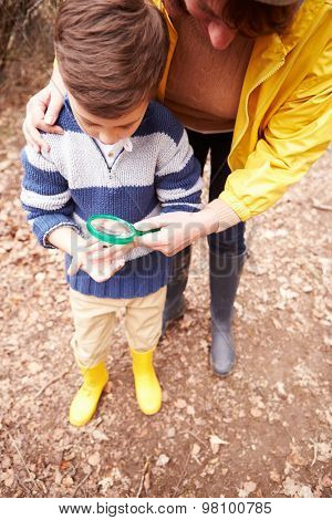 Boy With Mother Examining Insect With Magnifying Glass