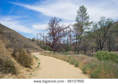 Dirt Road In California Wilderness