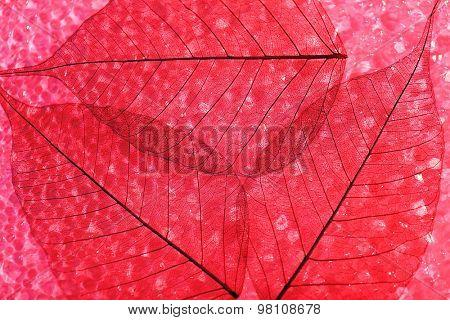 Red skeleton leaves background
