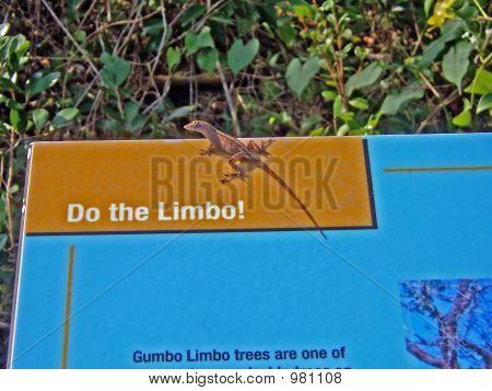 Do The Limbo