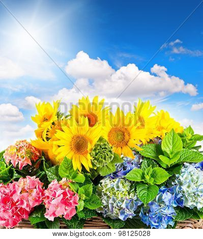 Sunflowers And Hortensia Blossoms Over Blue Sky. Summer Flowers