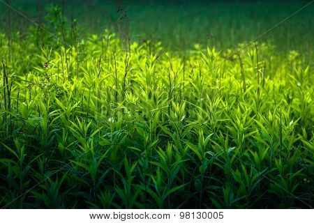Close Up Of Grass Thicket