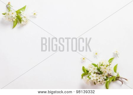beautiful cherry blossoms on the branches on a white background