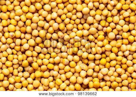 Macro closeup view of White / Yellow mustard or American mustard seeds