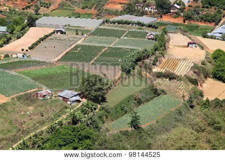 Dalat Farmland - Vietnam