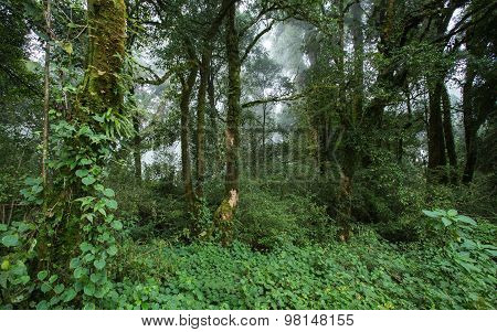 Green Jungle With Tree Rainforest And Mist