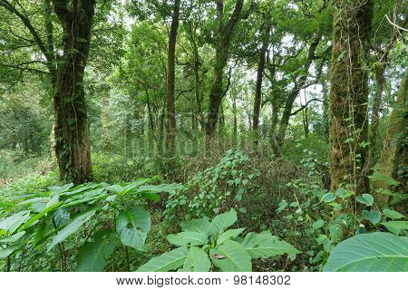 Green Jungle With Tree Rainforest