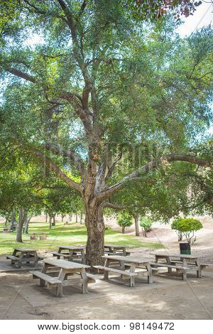 Group Of Picnic Tables
