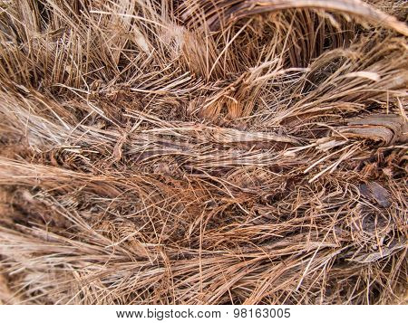 Background, Bark Date Palm