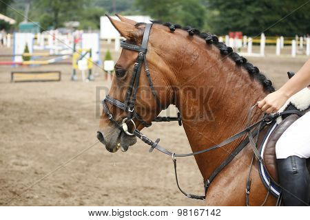 Side View Portrait Of A Beautiful Purebred Racehorse On The Jumping Competition