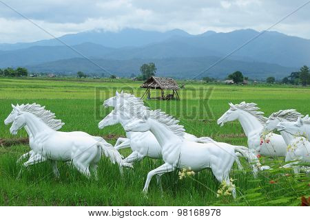 White Horse In Rice Fields