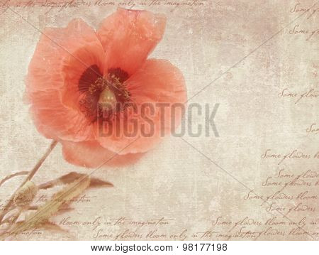 Vintage Postcard Template With Poppy Flower On Shabby Paper.