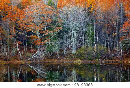 Fall Reflections Foliage Water