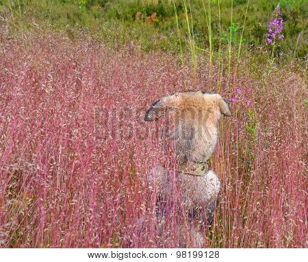 Nape of Home  Puppy Who For The First Time Saw  Wild Nature Among A Grass On A Forest Glade