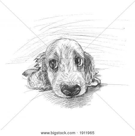 Cute Puppy Sketch