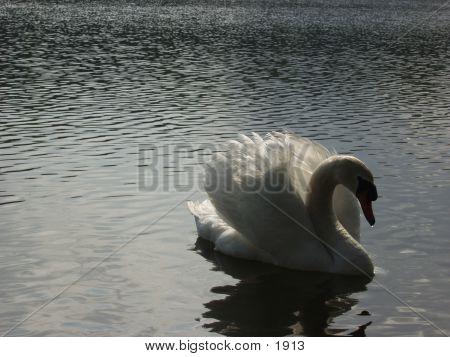 Swan 945 poster