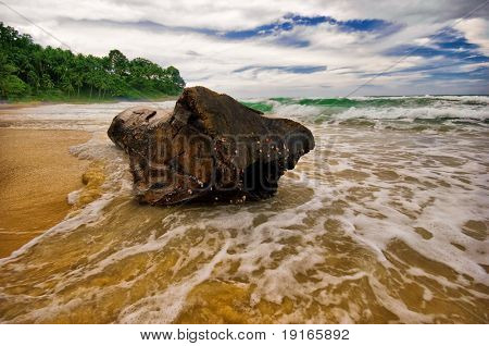 Big snag on the sand tropical beach in bad weather. Phuket island. Andaman sea. Kingdom Thailand