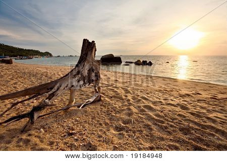 The old tree stump on a tropical beach in the glow of the setting sun