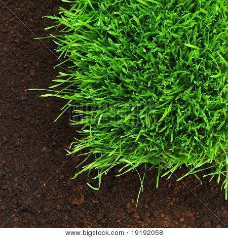 hierba saludable crecimiento en patrón de suelo