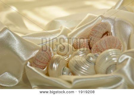 Sea Shells On Satin 3