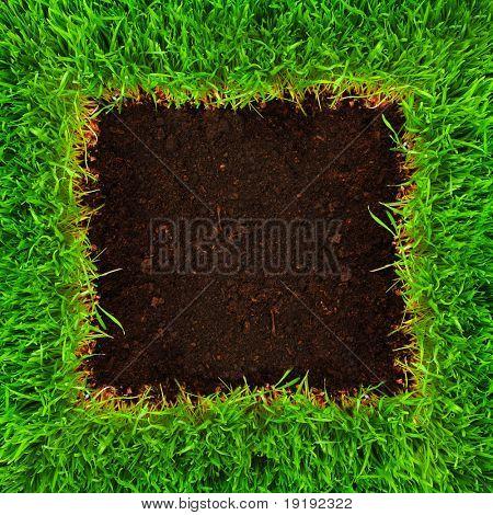 marco de hierba saludable crecimiento en patrón de suelo