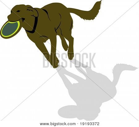 Dog Playing With disc