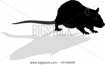 silhouette of rat