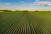 Landscape Of Soybean Field In Plains poster