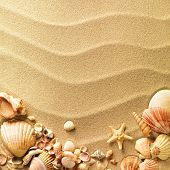 stock photo of shells  - sea shells with sand as background - JPG