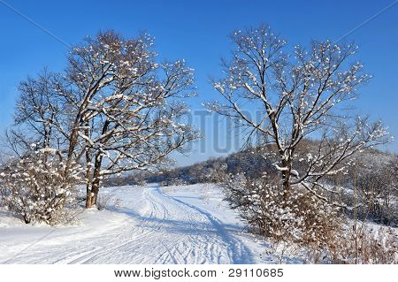 country road in the snow winter forest