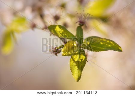 Spring Flowers Nature Background Nature