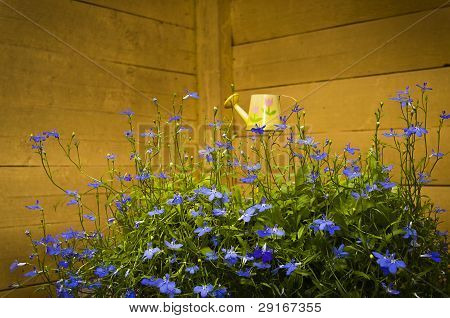 Blue flowers in yellow corner
