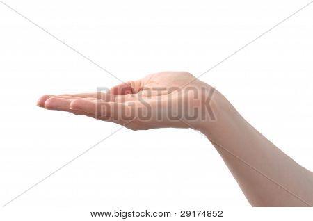 Horizontal Female Hand